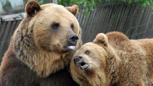 Rīga Zoo branch  Cīruļi