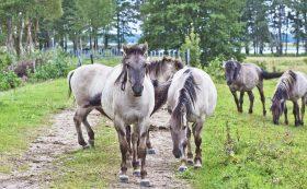 Пасбище диких лошадей и туров в Природном парке