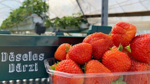 Berry farm  Dēseles dārzi