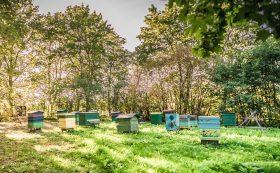 Beekeeping Farm