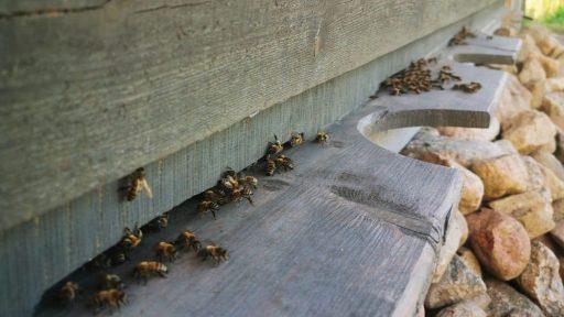 Dižozoli  Hive-house